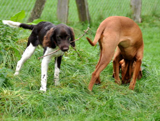 pension-hund-67_530